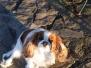 Nina - Aradia dei Regal Dogs