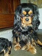 dixie_black_and_tan